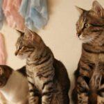 横浜市西区のペット葬儀【浅間町・みなとみらい・西戸部エリアの犬・猫 ペット供養・ペット火葬】