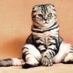 猫の火葬を横浜でする事に関しての専門サイト。猫の火葬を横浜でするための新着情報を紹介。