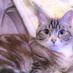 猫の火葬における横浜の特別情報ならこちら!早急にチェック!猫の火葬の横浜最新情報も