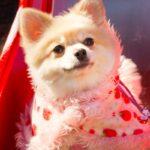 ペット火葬の横浜市青葉区の最新情報。ペット火葬を横浜市青葉区でお探しなら詳しくわかる専用サイトを利用して!