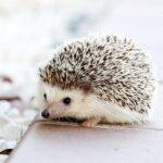 横浜市の動物火葬注目情報。横浜市の動物火葬に関しては、当webサイトが最適です!