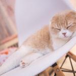 ペット火葬の横浜市青葉区に関連する重要サイト。ペット火葬の横浜市青葉区の直近情報はこちら!