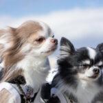 横浜市の犬の火葬注目情報。横浜市の犬の火葬の事がわかる専用サイトが最適です!