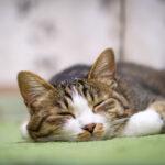 猫の火葬するなら横浜で・最新情報を公開中!いますぐこちらにアクセスを!