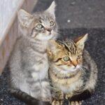 ペット 火葬 横浜 市 都筑 区のご相談はこちらの特別サイト。ペット 火葬 横浜 市 都筑 区に関しては、このページを利用して!