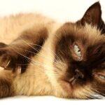 ペット 火葬 横浜 市 南 区に関しての知識サイト。ペット 火葬 横浜 市 南 区の最新情報を掲載。